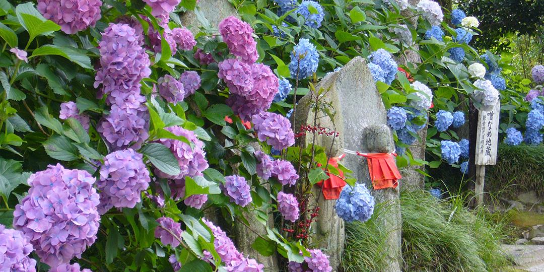 6月~7月に行くなら見ておきたい! 日本の初夏の花絶景