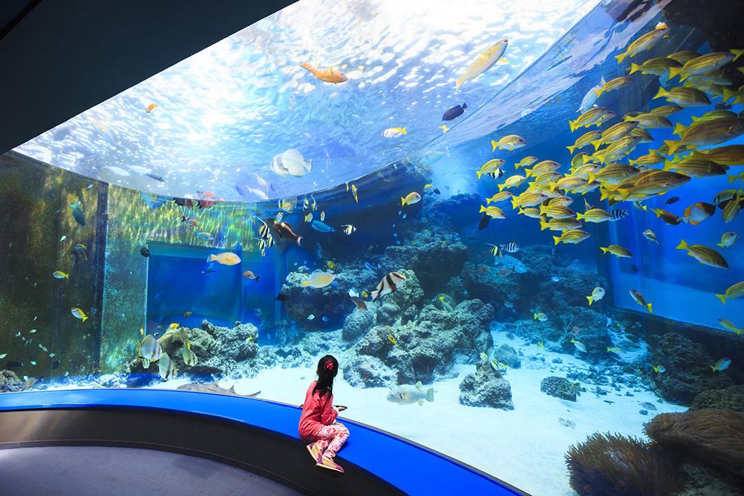 沖縄美ら海水族館(沖縄)