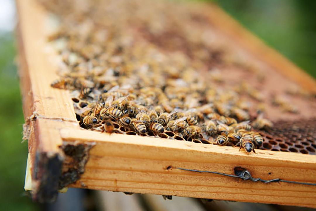 4代受け継がれ、100余年続く転地養蜂の老舗