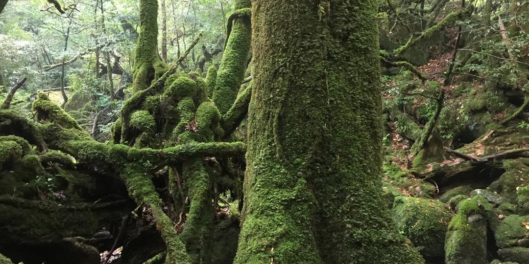 5 Things To Experience on Yakushima Island