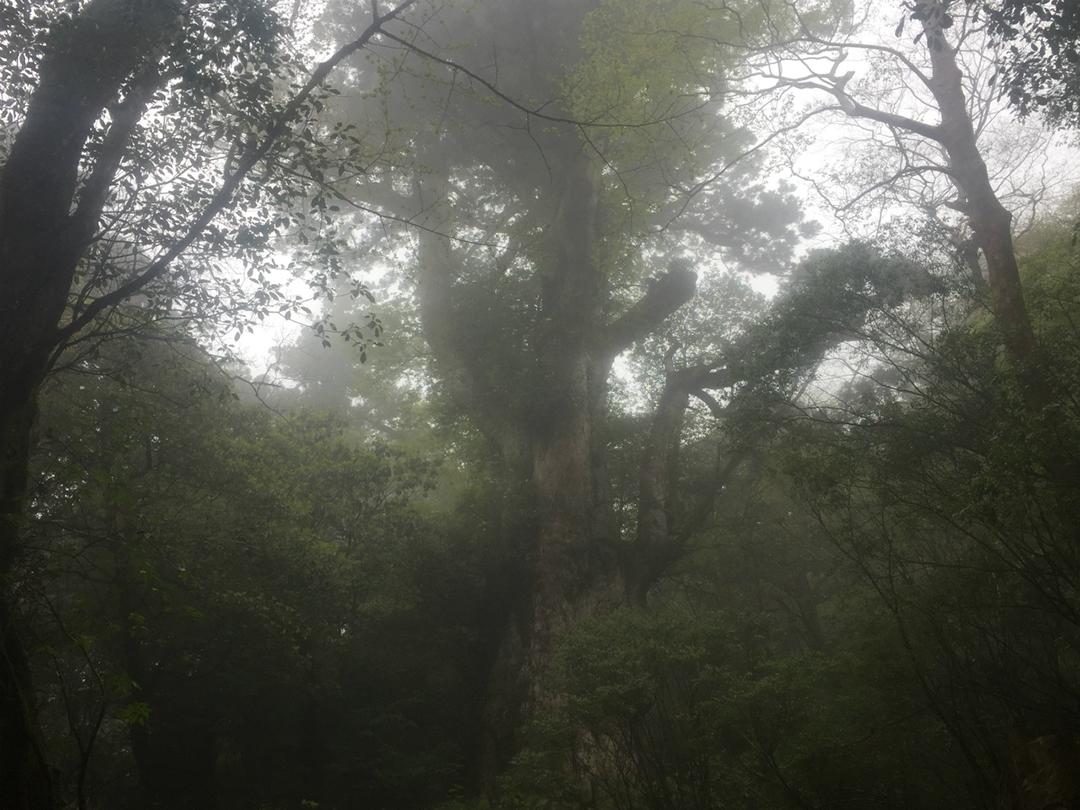 Hike to Jomon Sugi
