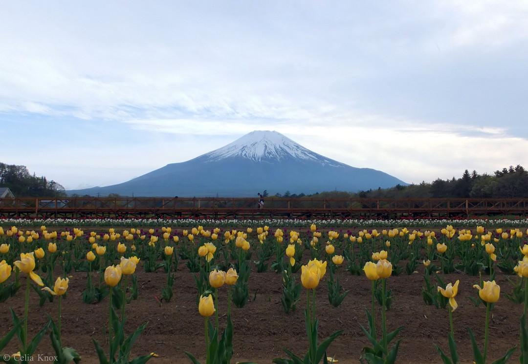 Yamanakako Flower Park