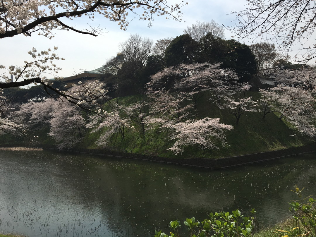 Tokyo's Cultural Face: Imperial Palace and Kokyo Gaien National Garden