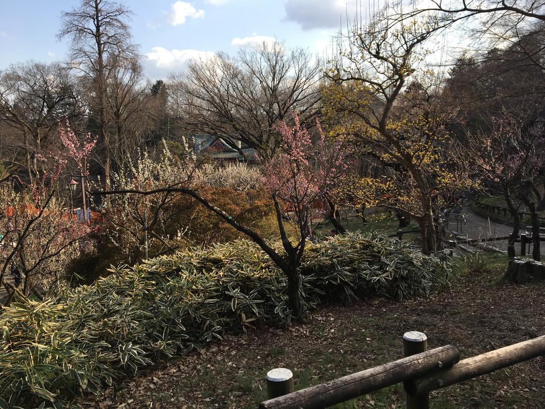Tokyo's Peaceful Face: Inokashira Park