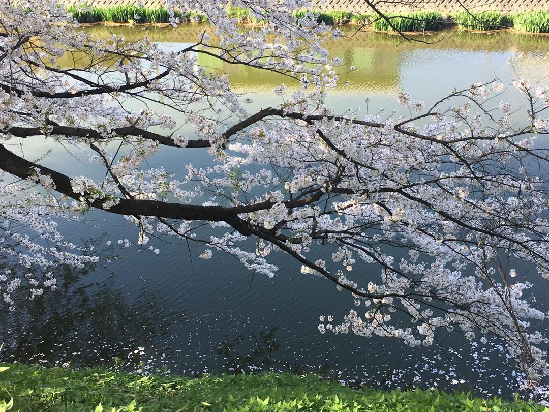 Spring (春)