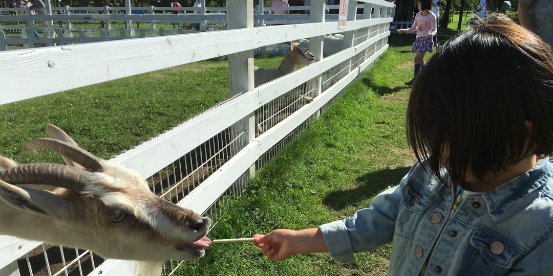 在札幌可以和儿童一起做的最棒的5件事