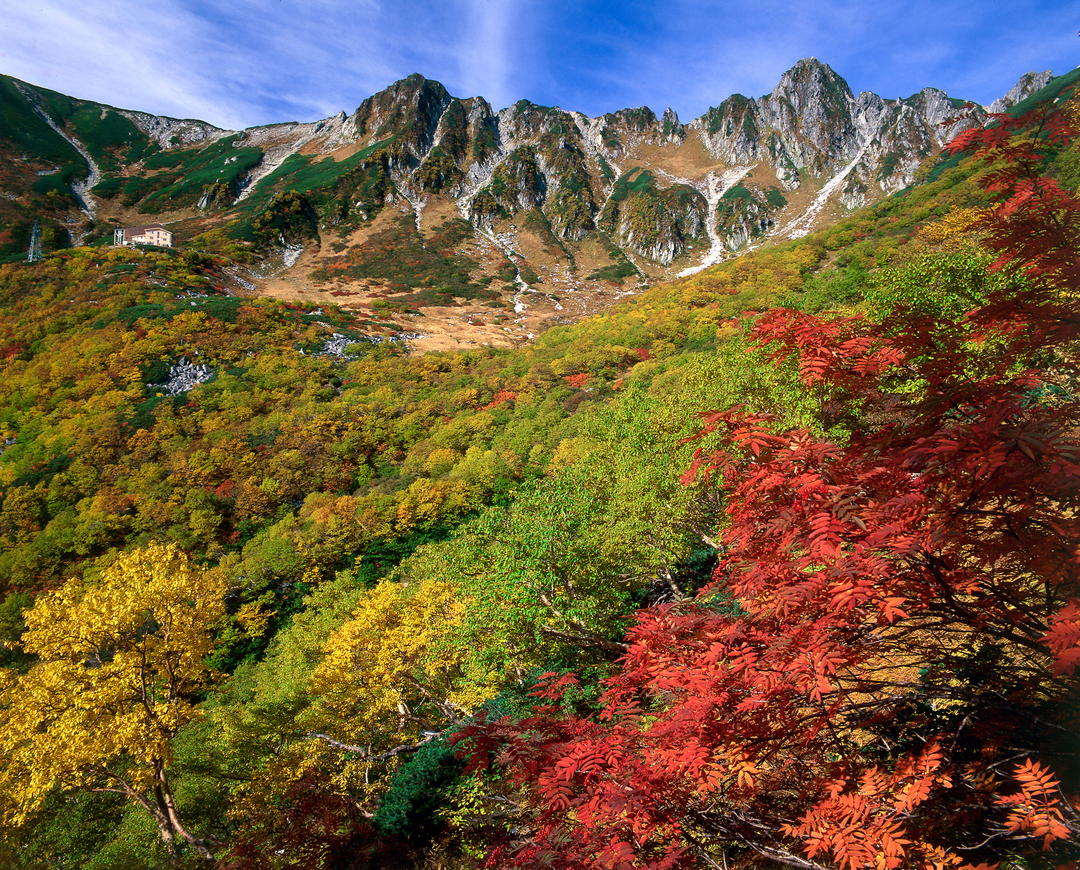 The colorful autumn The eyes dazzle in the gradation of autumn colored leaves painting the curl?!