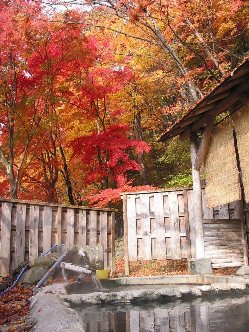 【塩原温泉 もみじの湯】紅葉が覆いかぶさる共同露天風呂