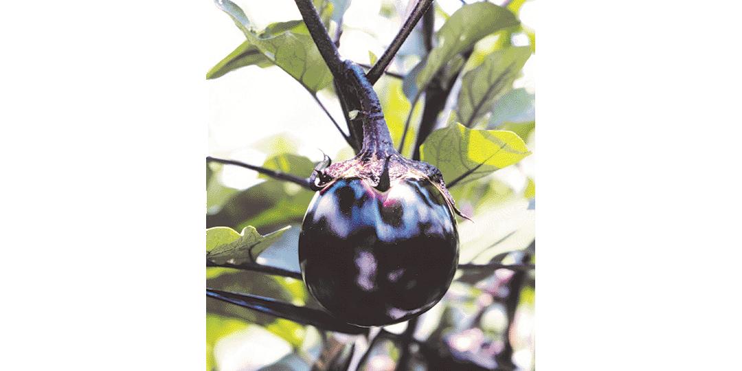 계절마다의 제철을 맛 본다! 전통 있는 맛, 교야사이(京野菜・교토 지역에서 재배되는 전통 채소)