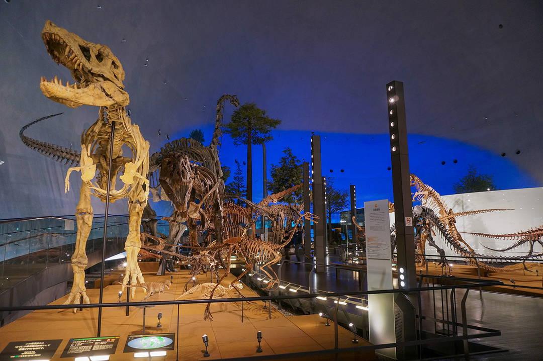 【恐竜の世界】 圧巻のティラノサウルスに思わず後ずさり!?