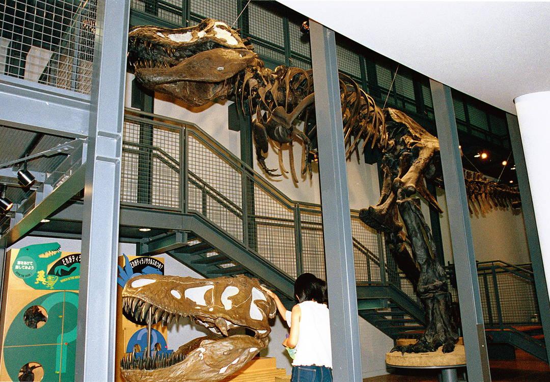 """【ダイノラボ】 恐竜に触れられる参加体験型の""""研究室"""""""