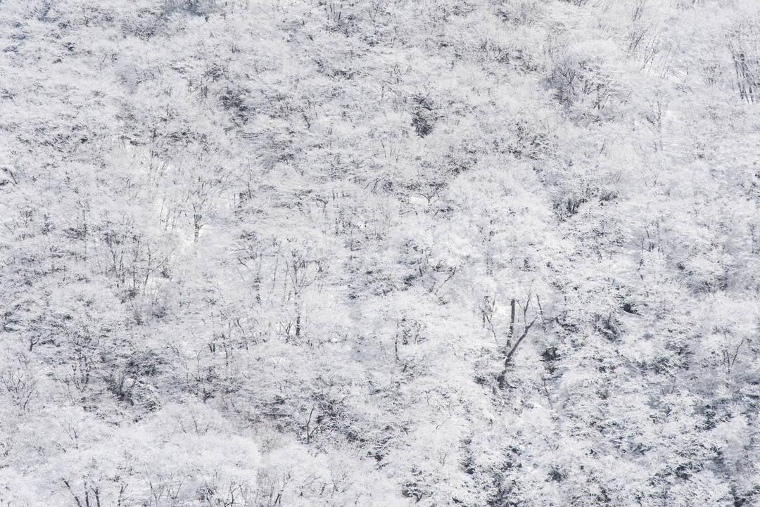 觀察生活在嚴酷環境中的野生日本獼猴