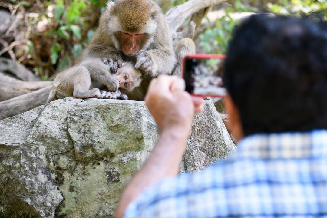 日本獼猴的魅力不僅限於溫泉!?