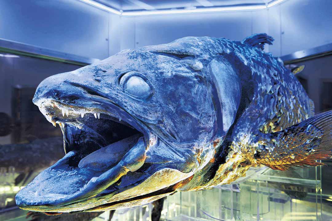 沼津港深海水族馆 腔棘鱼博物馆