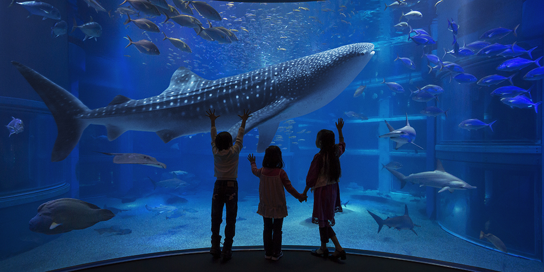 You'd love to visit! Aquariums in Japan