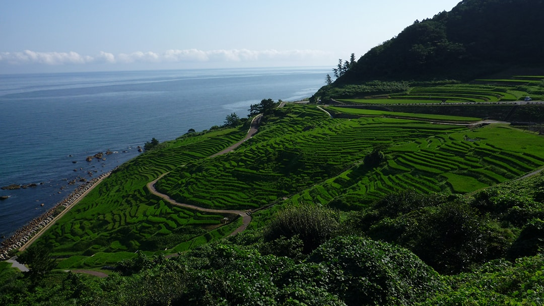 被世界農業遺產認定的農村風景 白米千枚田(siroyonesennmaida)