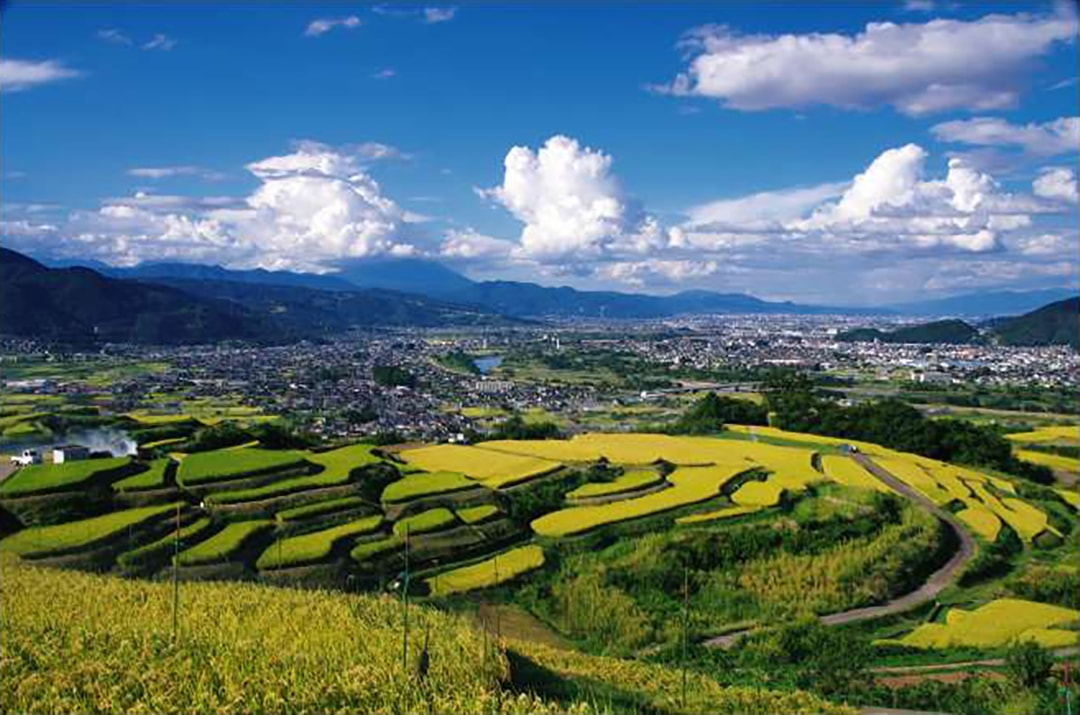Have a panoramic view of the city beyond the rice terraces