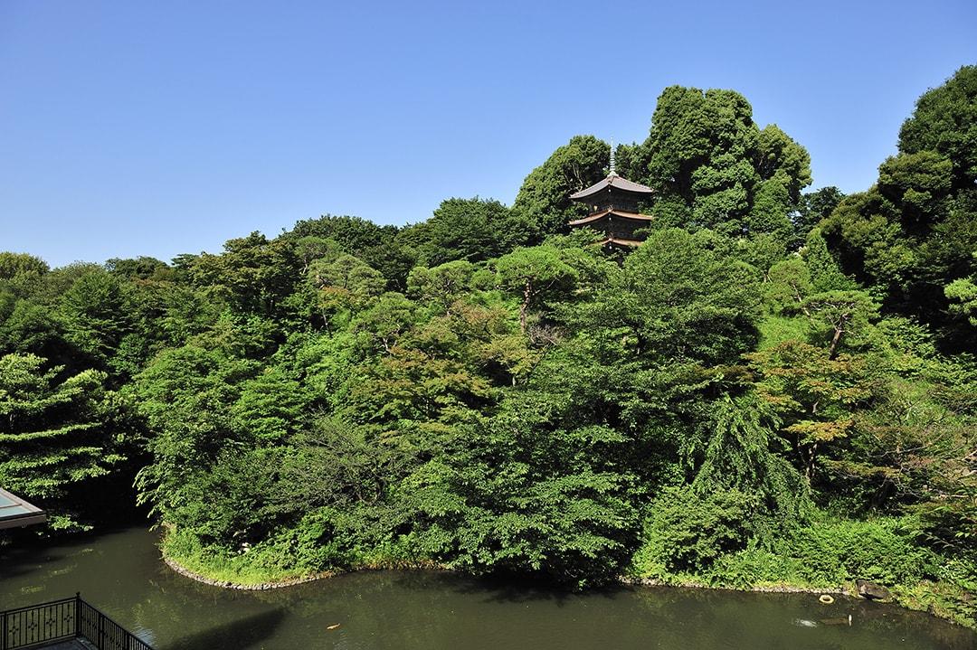 流動湧出的泉水,螢火蟲飛舞,像森林一樣的庭園 東京椿山莊酒店