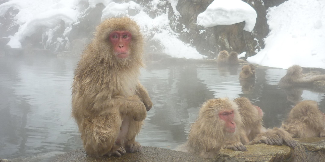 Four Animals to See in Japan