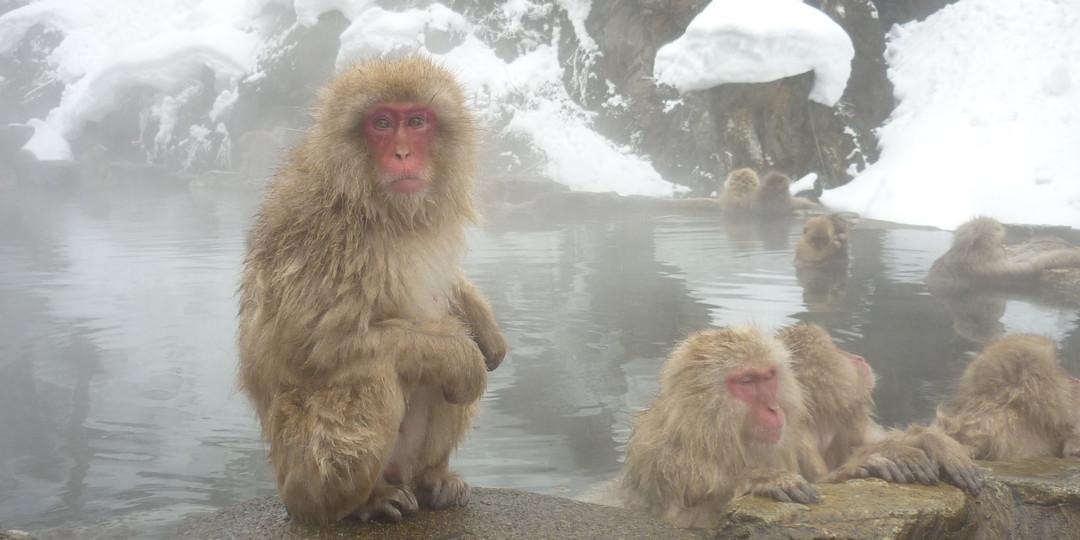 訪日必看的四種動物