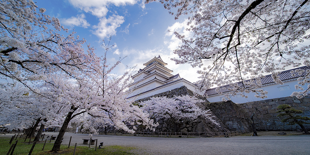 [VR image] Feel Like a Samurai When Viewing Cherry Blossoms—Tsuruga Castle