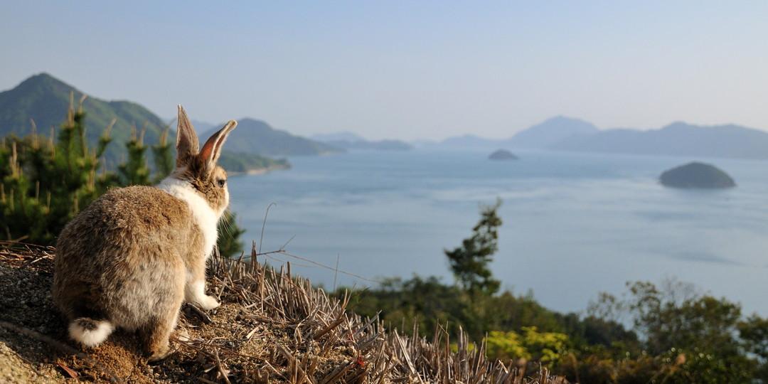 兔子与废墟之岛,大久野岛的当天往返海岛之旅