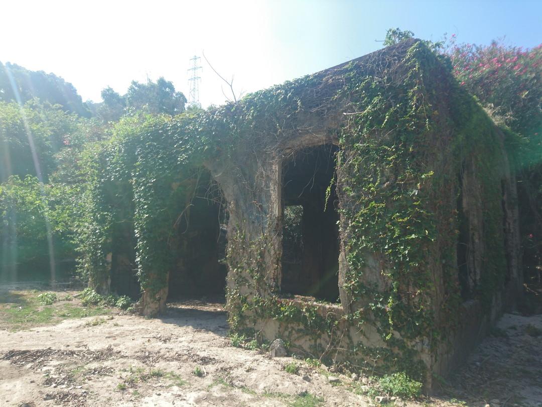 被埋沒在綠色中靜靜佇立的廢墟何謂大久野島的另一張臉