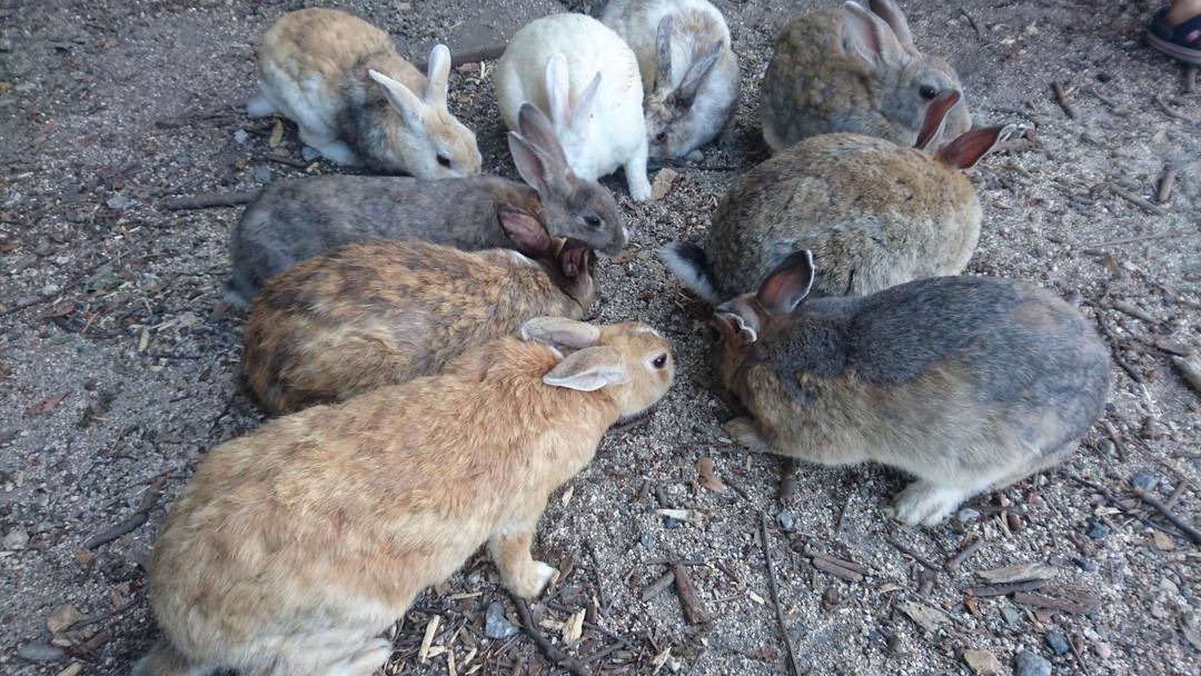 야생 토끼들과 사진 촬영을 마음껏!