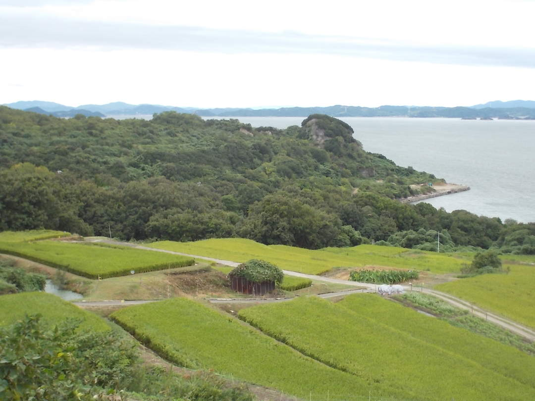 "rice terrace fields, olive groves in art. ""Teshima"" where you can taste the island life"