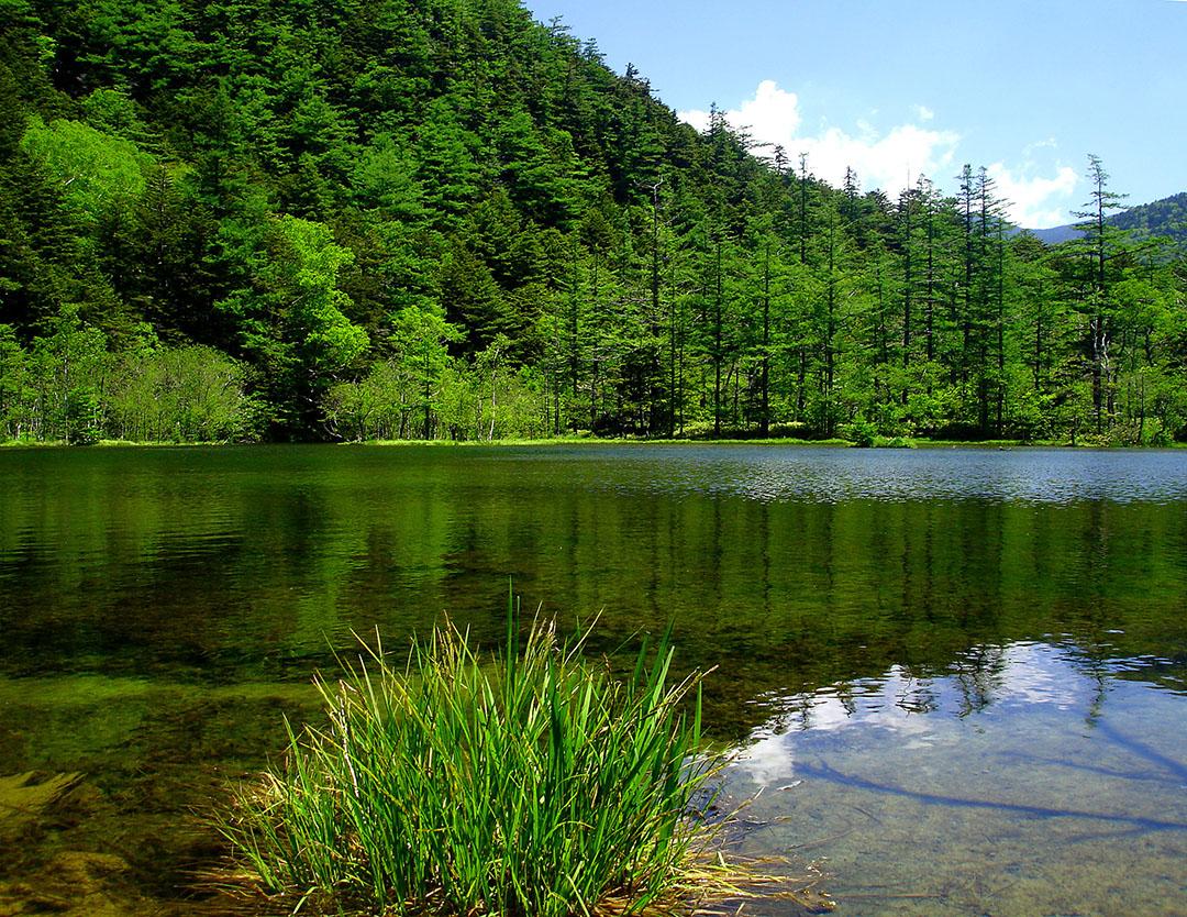 Get luck at spiritual spots in Myojin Pond.
