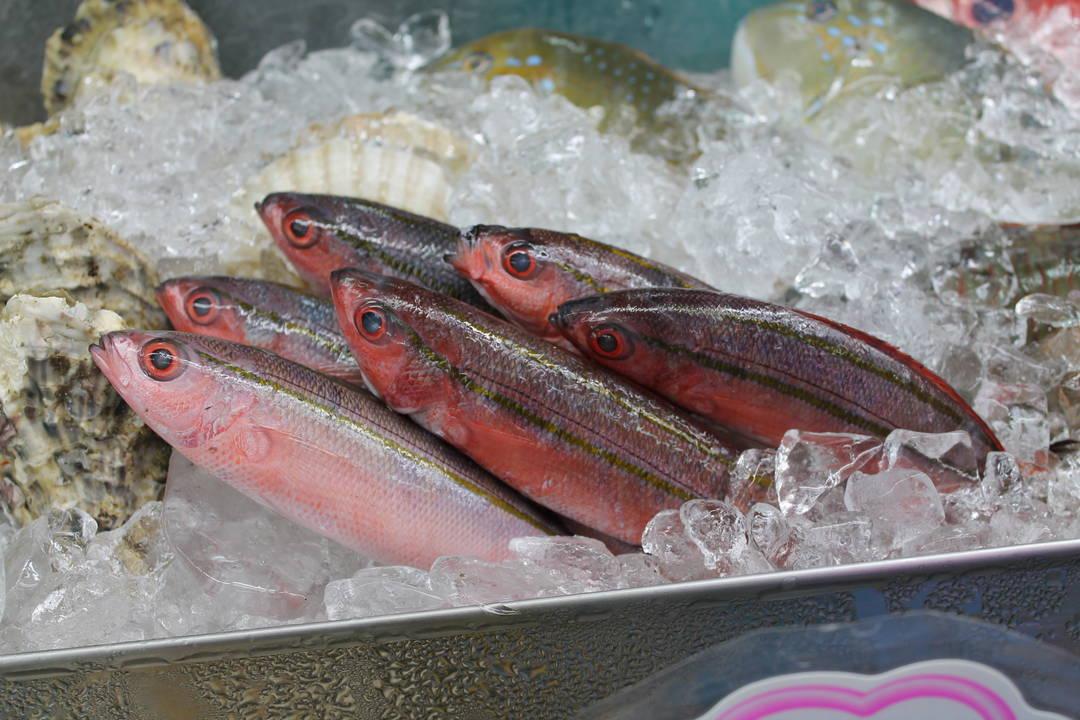 県魚・グルクン