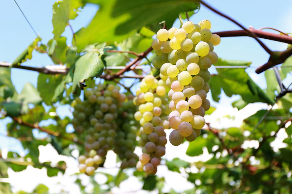 甲州発、世界一のワインに挑む