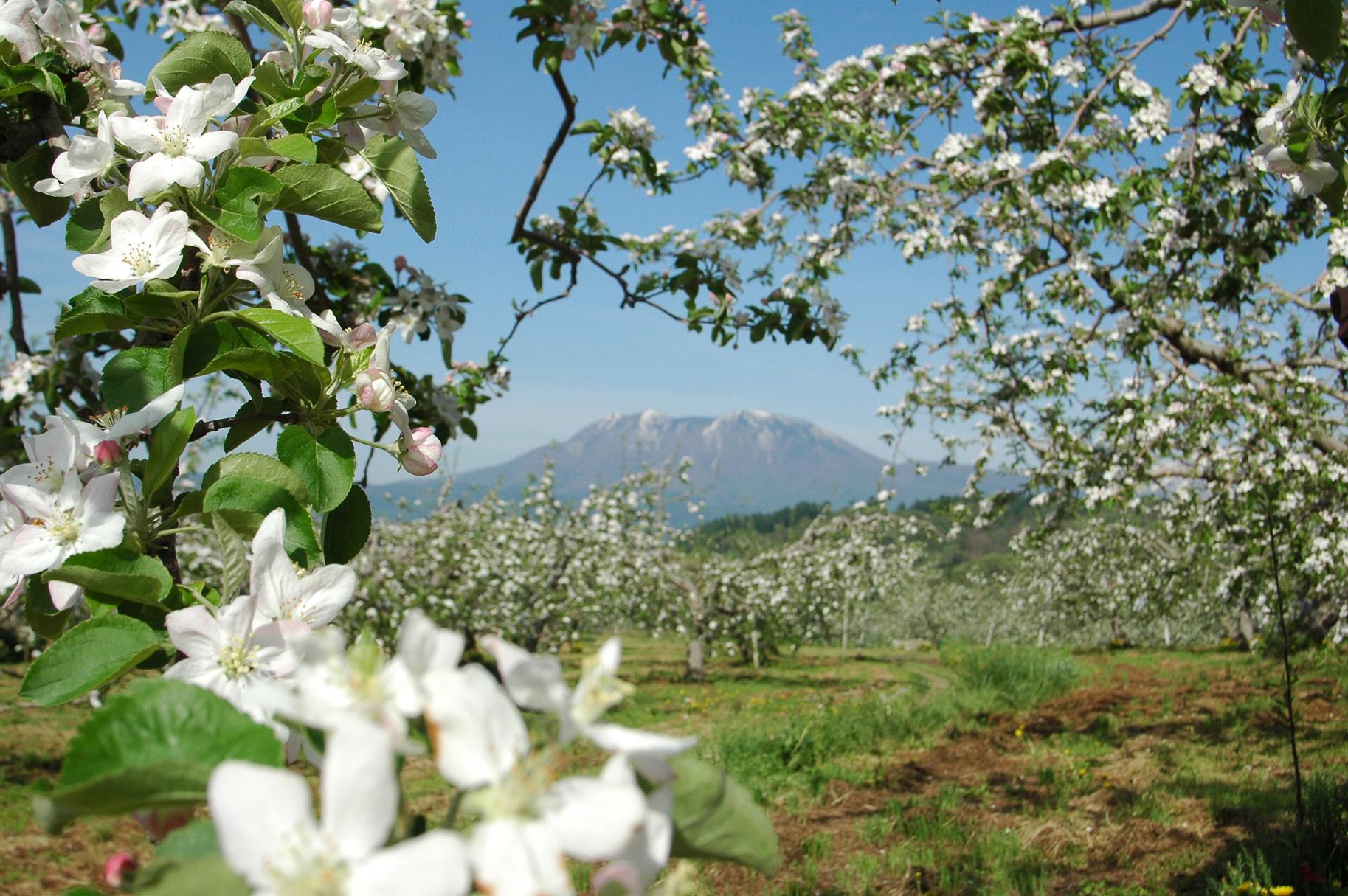 花めぐり!長野県いいづな町の春。