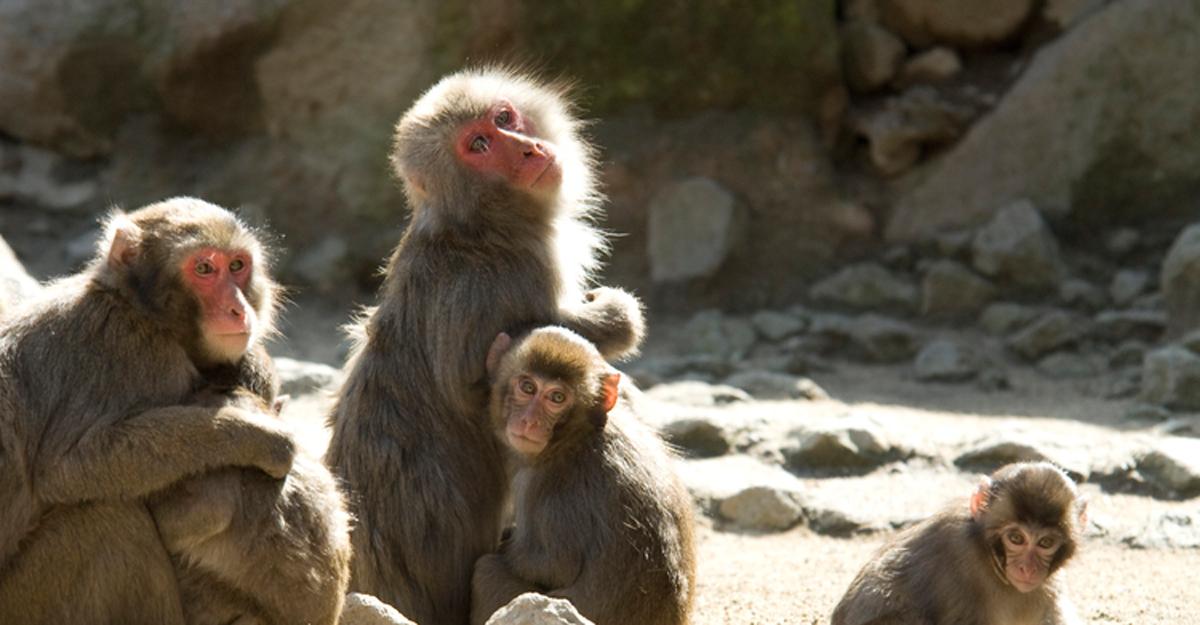 다카사키야마 자연동물원