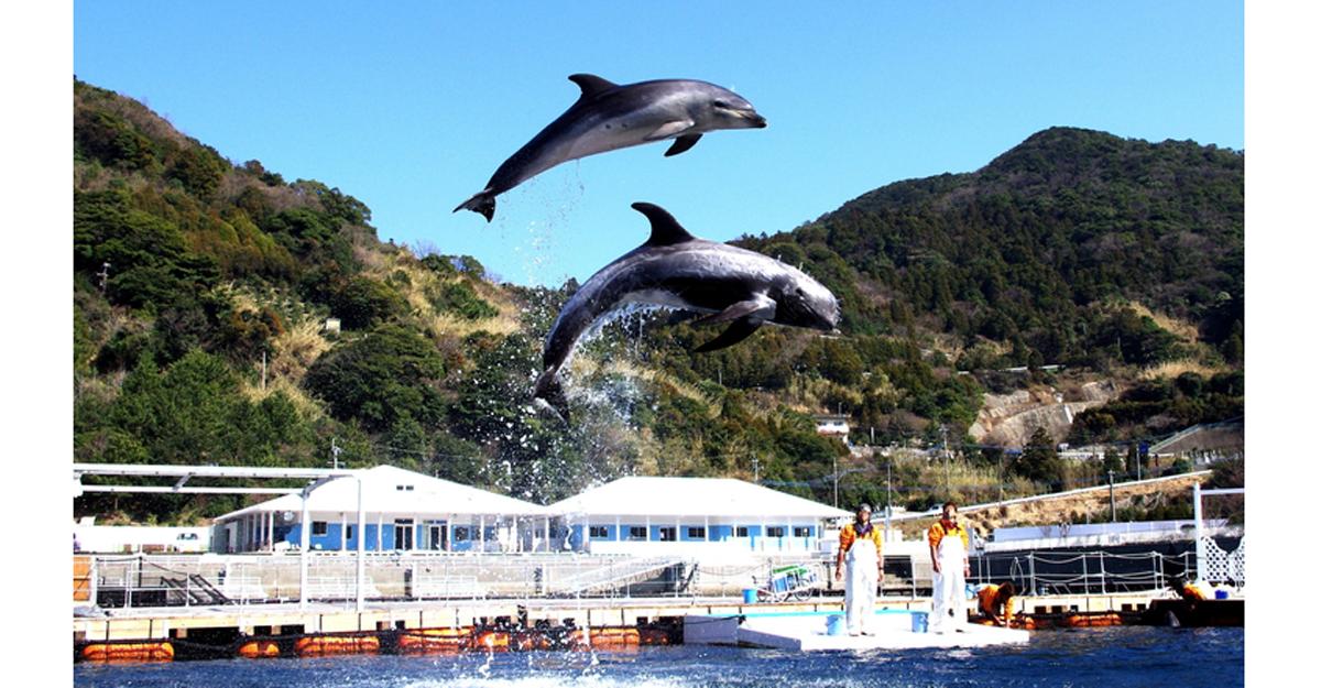 Umitama Taiken Park, Tsukumi Dolphin Island