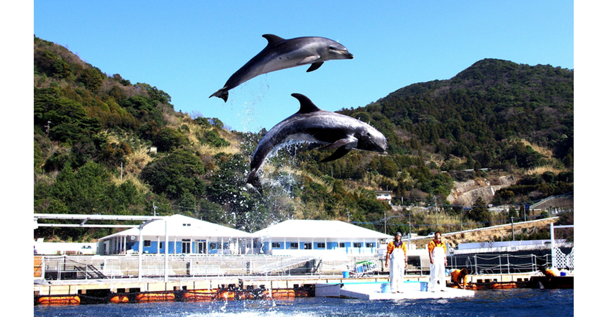 海珍珠体验乐园 津久见海豚岛