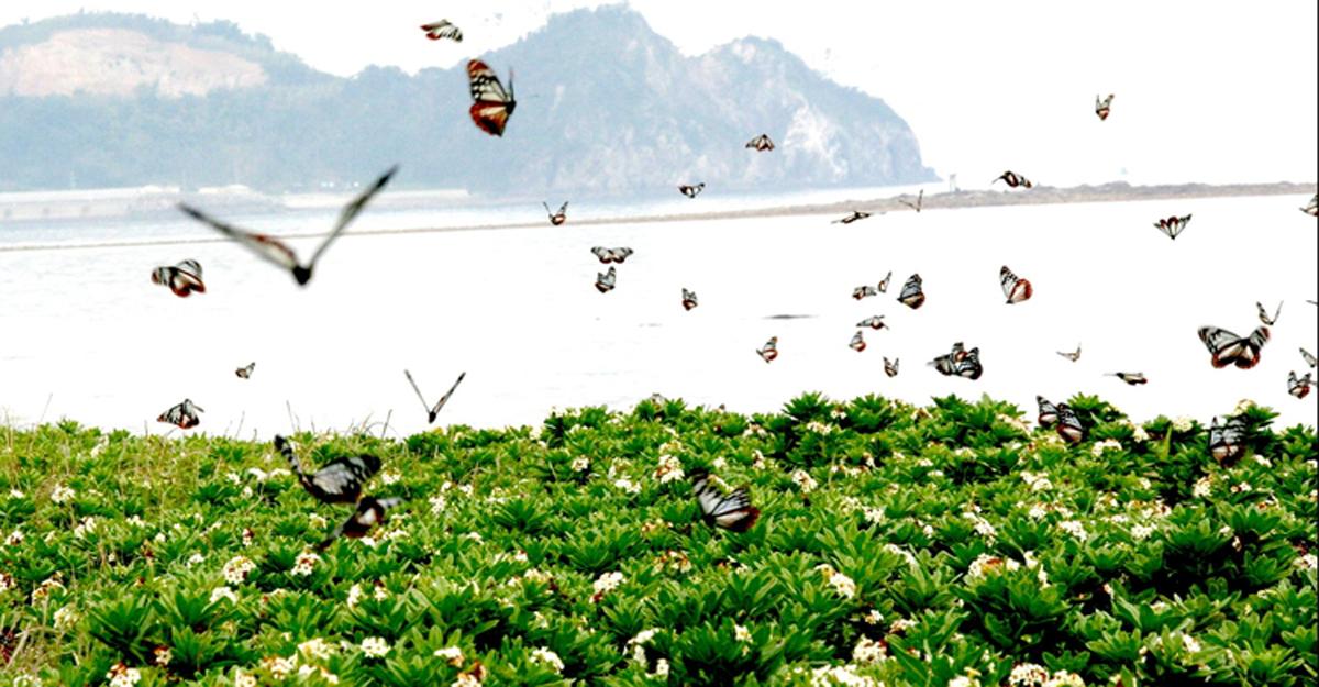 板栗虎蝴蝶棲息地