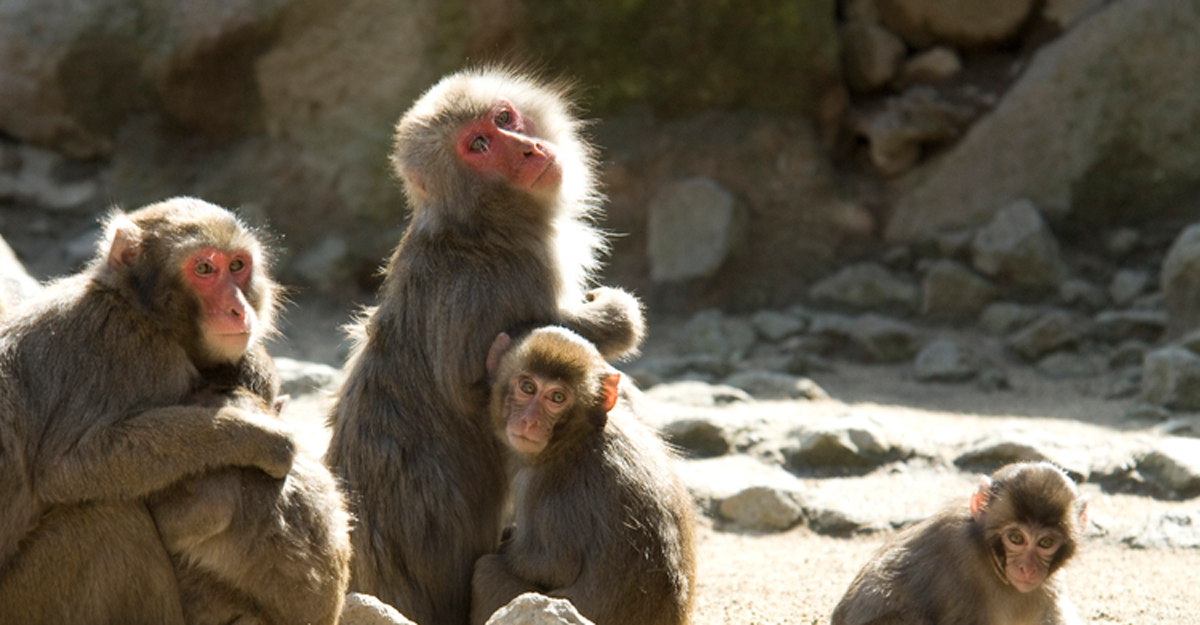 Takasakiyama Natural Zoological Garden