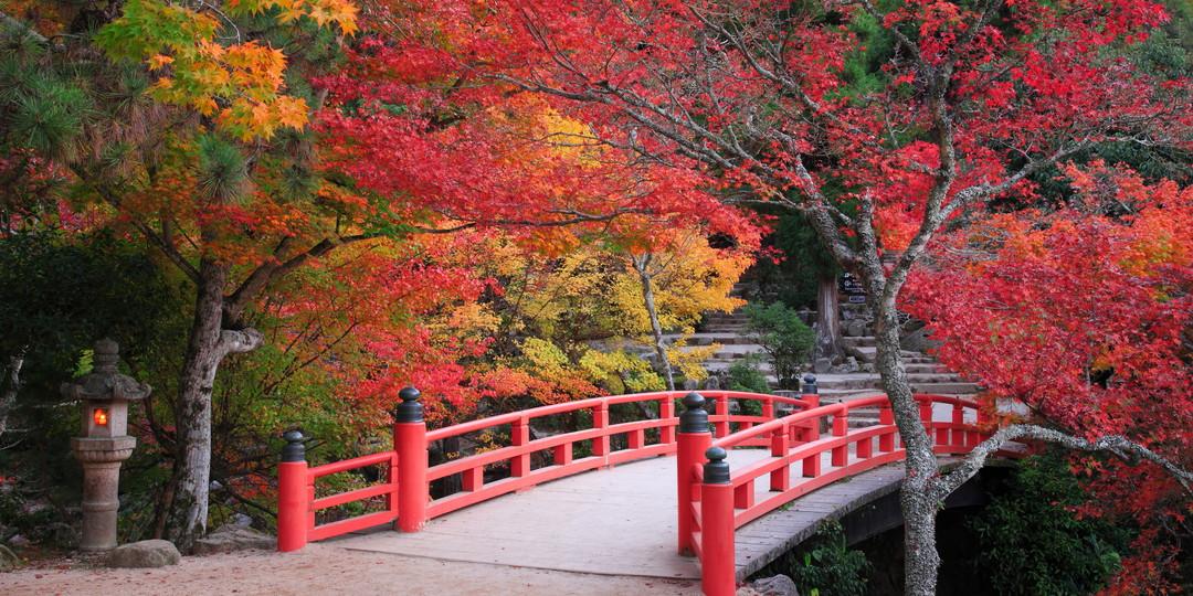 Miyajima (Momijidani Park)