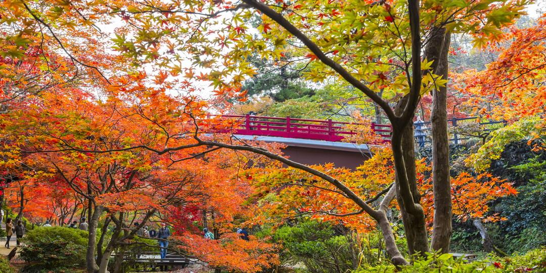 Yahiko Park Momijidani