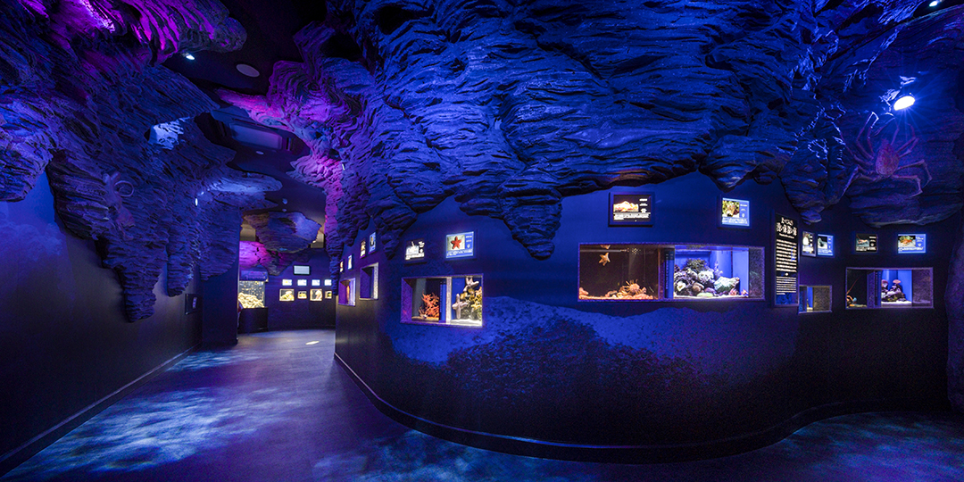Numazu Deep Blue Aquarium Coelacanth Museum