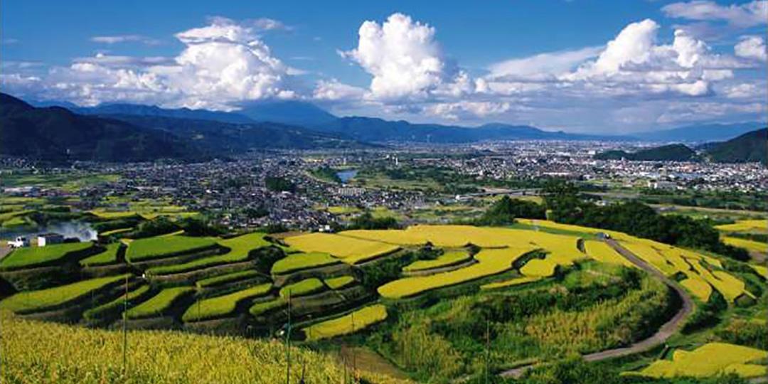 Rice terrace of Obasute