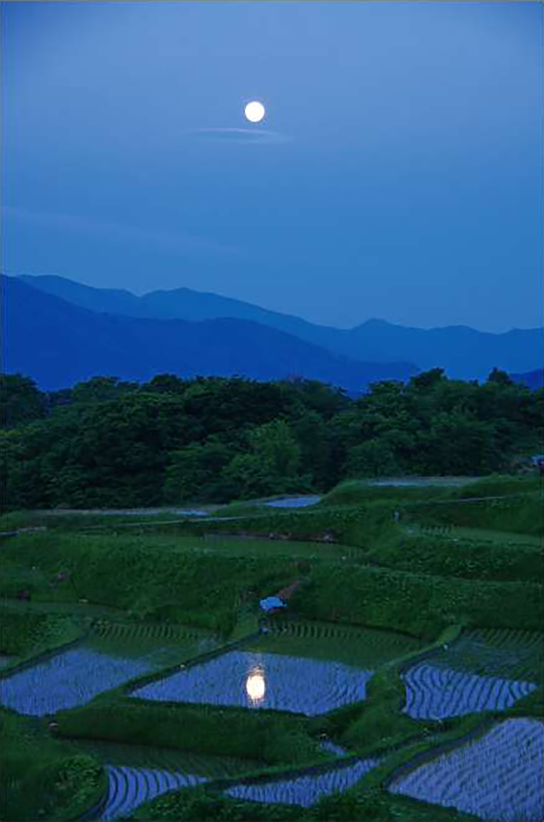 Rice terrace of Obasute
